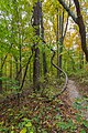 Parque Estatal Brown County, Indiana, Estados Unidos, 2012-10-14, DD 08.jpg