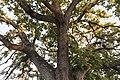 Particolare parte superiore del tronco.jpg