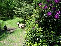 Path, Godshill Inclosure - geograph.org.uk - 1334074.jpg