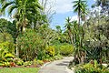 Path - Mounts Botanical Garden - Palm Beach County, Florida - DSC03648.jpg
