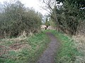 Path to Reedbed Hide - geograph.org.uk - 756628.jpg