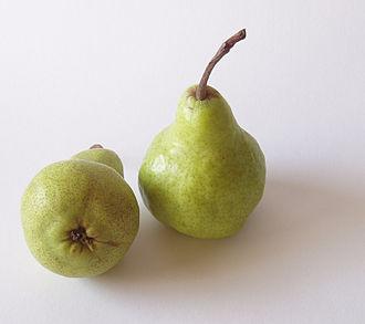 Pyrus communis - Image: Pear peckham 78