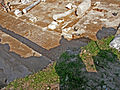 Peltae in Tzafririm Mosaic, Israel (5382060536).jpg