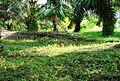 Perkebunan kelapa sawit milik rakyat (66).JPG