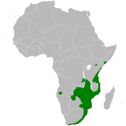 Phyllastrephus terrestris distribution map.png