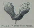 Picture Natural History - No 354 - Winged Seed-vessel.png