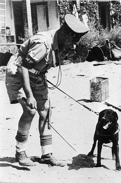 """חיפושי נשק ואנשי פלי""""ם - חיפוש נשק בעזרת כלב"""
