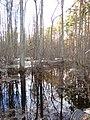 Pludi druvciema 2011 - panoramio (28).jpg