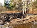 Pludi druvciema 2011 - panoramio (62).jpg