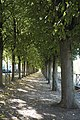Poissy Cours du 14 Juillet 625.jpg