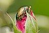 Popillia-Kadavoor-2015-08-22-001.jpg