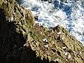 Portpatrick - panoramio (24).jpg