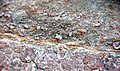 Precambrian-Cambrian nonconformity (Sawatch Sandstone over Pikes Peak Granite; Ute Trail, Manitou Springs, Colorado, USA) 20.jpg