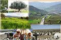 Productions agricoles Algérie.jpg
