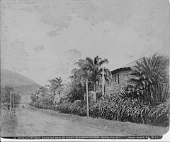 Punahou Street, Showing of Night-Blooming Cereus, photograph by Frank Davey (PPWD-17-3-027).jpg