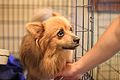 Puppy dog face.jpg