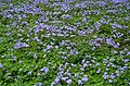 Purple waves on a green sea (29173558343).jpg
