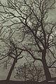 Qorxulu maraqli endemic svln4821.jpg