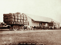 Queensland State Archives 5118 Mitchell Maranoa River Merino Wool 123 bales 12 tons 26 bullocks c 1897.png