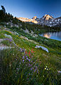 Rae Lakes Wildflowers II (6191188206).jpg