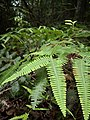 Rain forest 22.jpg