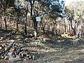 Restauration de la suberaie 2 CD25 83 XII-2003.jpg