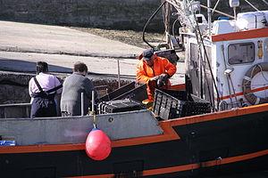 Retour de la pêche à la seiche du fileyeur Jason IV (26).JPG