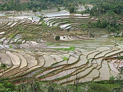 Rice terraces in Indonesia-IMG 3082.jpg