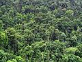 Rio Dulce Jungle (3746451005).jpg