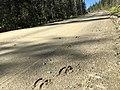 Road to Tanana Dedication (29062768960).jpg
