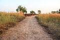 Road to stone circles Wassu Gambia.jpg