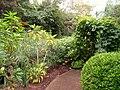 Rodef Shalom Biblical Botanical Garden - IMG 1321.JPG