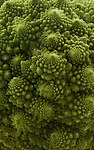 Romanesco Brassica oleracea close Richard Bartz.jpg