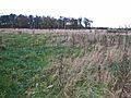 Rough grazing and woodland, near Hurworth Burn - geograph.org.uk - 278967.jpg
