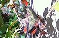Ruby-Throated-Hummingbird.jpg