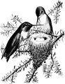 Ruby - throated Hummingbird-Birdcraft-0038-2.png