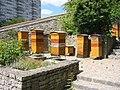 Ruche parc George Brassens Paris.jpg