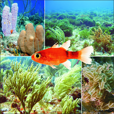 Saba Bank underwater atoll composite image.png