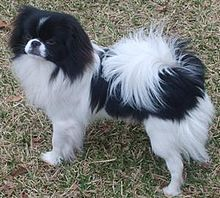 Image Result For Can Maltese Dogs