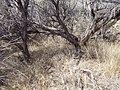 Sagebrush steppe near Magic Resevoir (9675592878).jpg