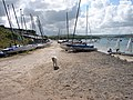 Sailing dinghies at Rock - and a friendly dog - geograph.org.uk - 484809.jpg