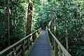 Sandakan Sabah Sepilok-Orangutan-Rehabilitation-Centre-19.jpg