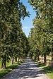 Sankt Georgen am Längsee Sankt Martin Birnbaumallee 12092018 4636.jpg
