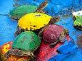 Schildkröten لاکپشت 03.jpg