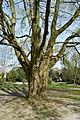 Schleswig-Holstein, Wedel, Naturdenkmal 07-06 NIK 2163.JPG