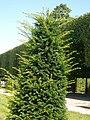Schwetzinger Schlossgarten - Flickr - cspannagel (51).jpg