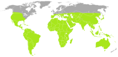 Scorpiones distribution.png