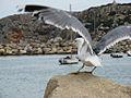 Seagull on a rock at a beach.jpg