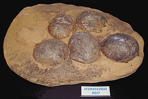 Dinosaur egg - Therizinosaur nest and eggs in from Dinosaurland in Lyme Regis, England.