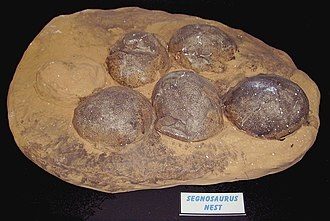Dinosaurland Fossil Museum - Exhibit of Segnosaurus nest with eggs